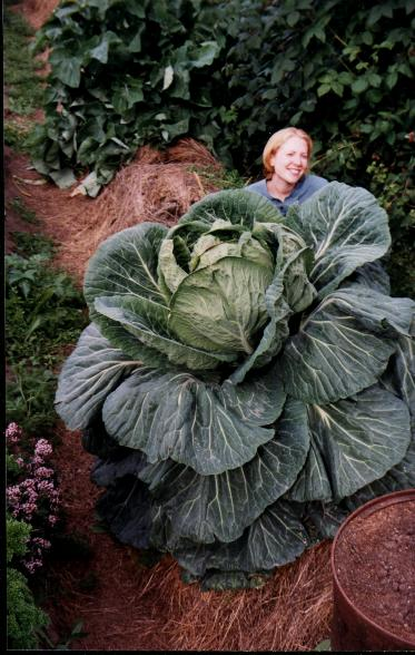 Giant Vegetable